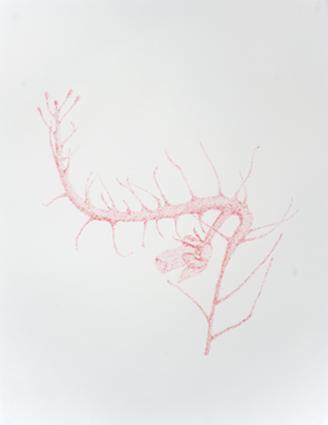 Masaki WATANABE - Atelier MAMEO