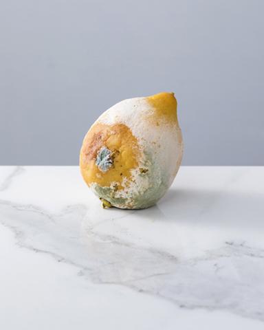 ATELIER n°8-ATELIER ONZE- EDWIGE LAMY- Fruits moisis