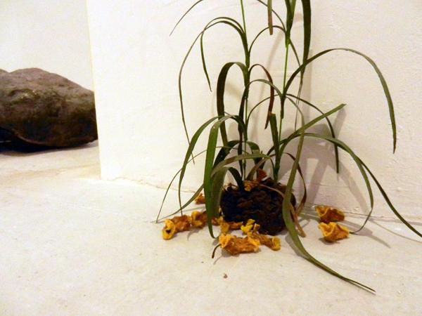 plante-etcailloux2